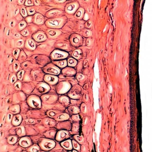 Mikroskopski preparati